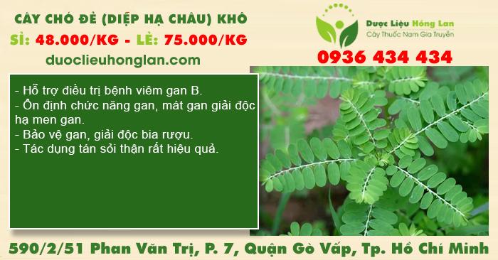 Cây Chó Đẻ (Diệp Hạ Châu) khô